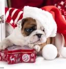 Новый год Собаки 2018: картинки для детей. Дед Мороз, зима, раскраски
