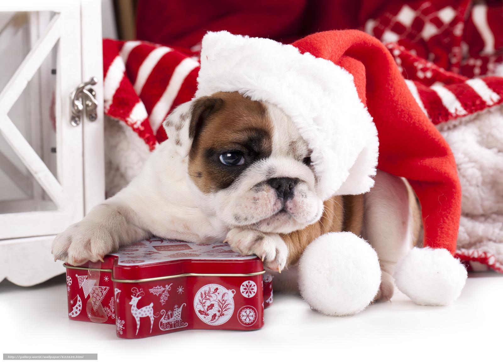 Красивые фото с символом Нового года 2018 — Собакой на рабочий стол.