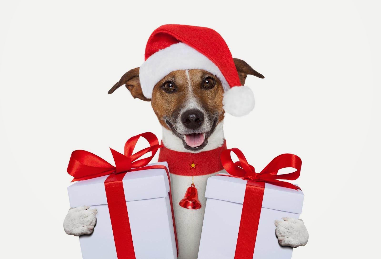 Dog-Christmas-gift-wallpapers132014.jpg