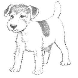 Рисунки на Новый год Собаки 2018 карандашом.